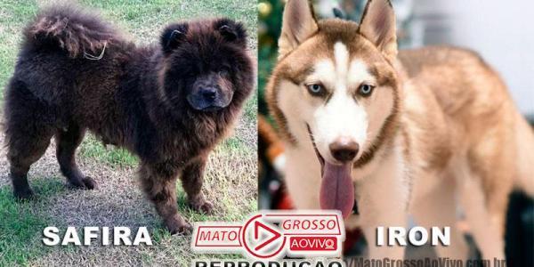 Mais duas mortes de cachorros por envenenamento este mês em Alta Floresta, dona dos animais se emociona ao lembrar 37