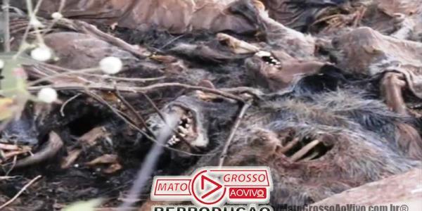 Cemitério de cachorros a beira da estrada e dentro de rio que abastece Alta Floresta, mais de 20 animais foram constatados 39