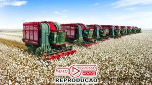 Produtores de algodão de MT comemoram emenda derrubada pela Assembleia que garante 100% de incentivos fiscais 104