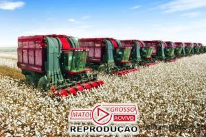 Produtores de algodão de MT comemoram emenda derrubada pela Assembleia que garante 100% de incentivos fiscais 72