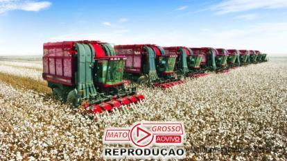 Produtores de algodão de MT comemoram emenda derrubada pela Assembleia que garante 100% de incentivos fiscais 3