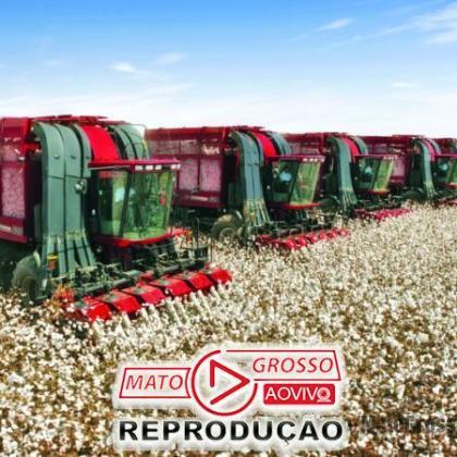 Produtores de algodão de MT comemoram emenda derrubada pela Assembleia que garante 100% de incentivos fiscais 103