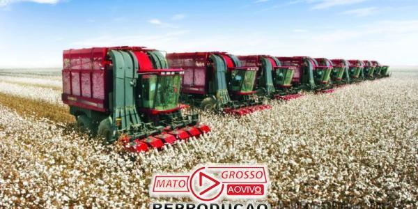 Produtores de algodão de MT comemoram emenda derrubada pela Assembleia que garante 100% de incentivos fiscais 32