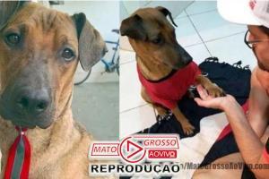 Torcedor carioca faz rifa de ingresso do jogo do Flamengo X Grêmio para tratar cachorro com câncer 51