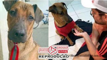 Torcedor carioca faz rifa de ingresso do jogo do Flamengo X Grêmio para tratar cachorro com câncer 16