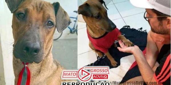 Torcedor carioca faz rifa de ingresso do jogo do Flamengo X Grêmio para tratar cachorro com câncer 29