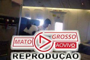 Será verdade que um panda viajou sentado numa poltrona de avião? 59