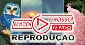 Incríveis fotos de animais são realmente verdadeiras ou falsas? 66