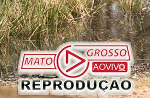 Foto mostra um coala velando um outro coala morto pelos incêndios na Austrália? 63