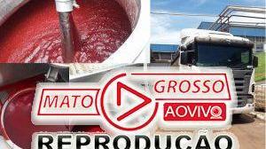 O café em pó brasileiro é feito com sangue de boi? 250