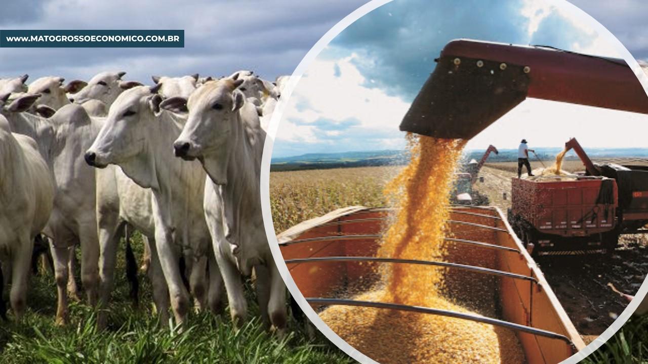 Apesar da incerteza da retomada da economia, Valor Bruto de Produção de Mato Grosso registra melhora