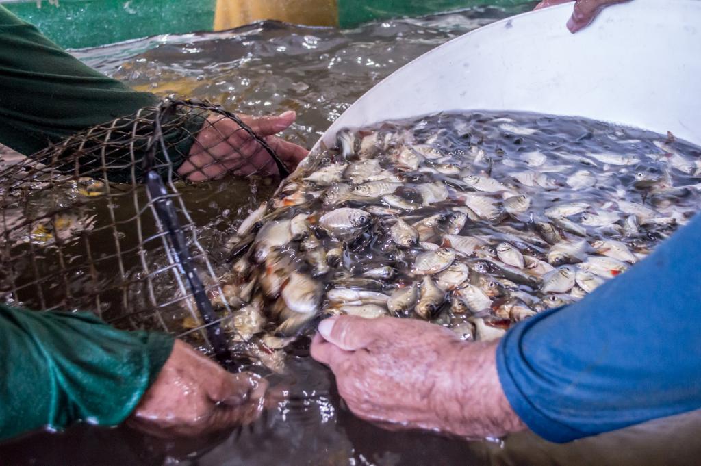 Proder garante para produtores rurais de Mato Grosso incentivos fiscais de até 62,5%