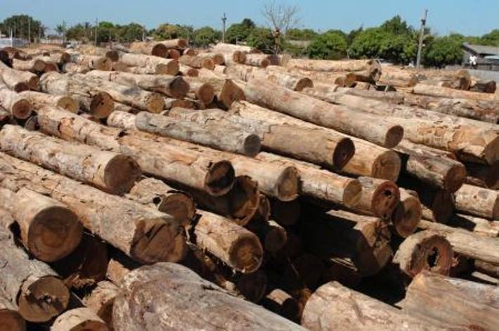 Exportações de produtos madeireiros de Mato Grosso crescem 32% e movimentam US$ 9,7 milhões