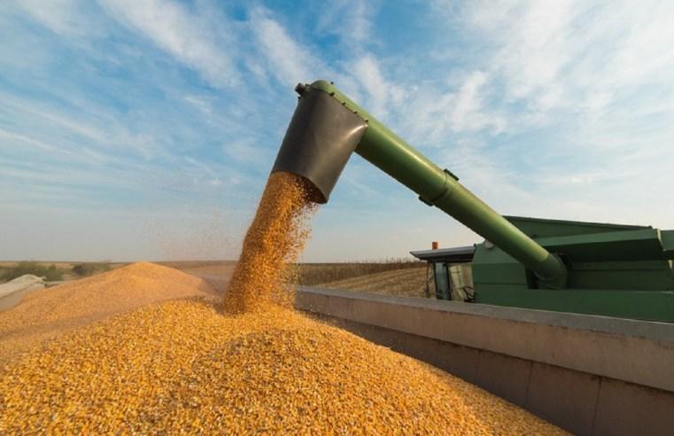 Soja, milho e carne bovina puxam VBP do País e de Mato Grosso nesta safra