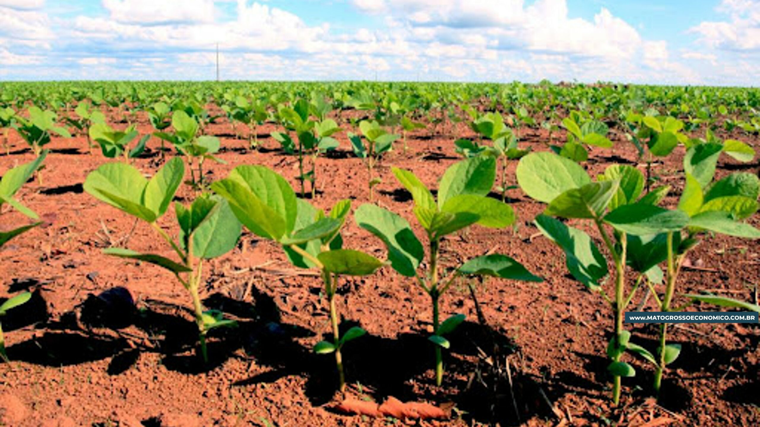 Semeadura da nova safra de soja começa em quatro regiões de MT