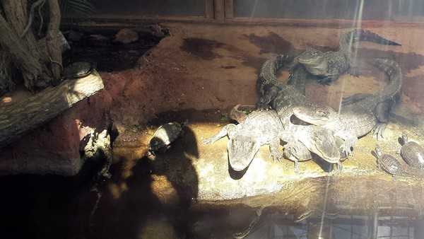 Planet Exotica crocodiles