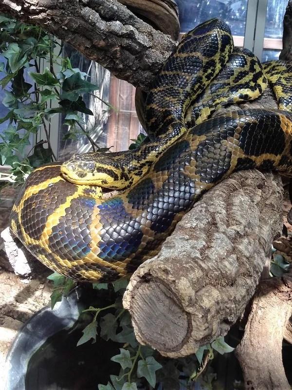 serpent Planet Exotica