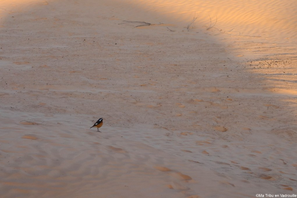 oiseau sur la dune