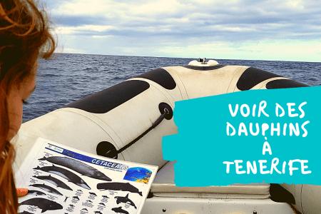 dauphins-tenerife