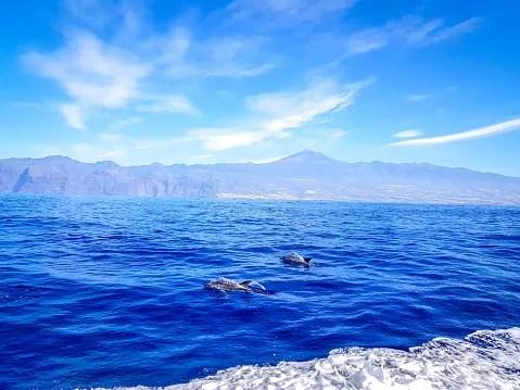 observer les dauphins