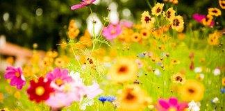 fiori-matrimonio-stagioni