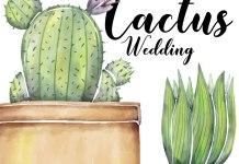 matrimonio tema cactus