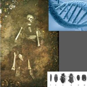 Curso de Antropologia forense