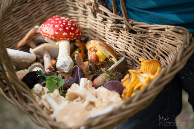 A basket full of edibles - with one exception