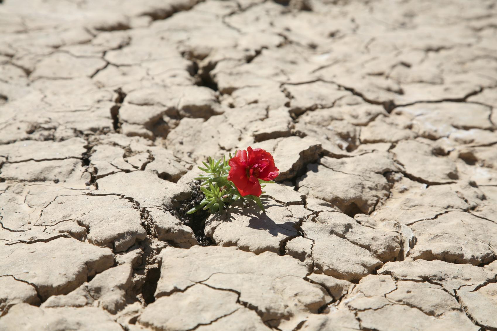 https://i1.wp.com/www.matthewfranklinjones.com/wp-content/uploads/2014/07/istock_flower_in_desert_med.jpg