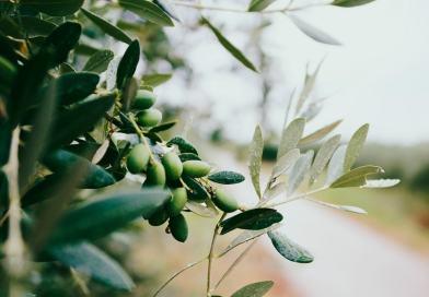 Perchè è meglio friggere con l'olio extravergine d'oliva