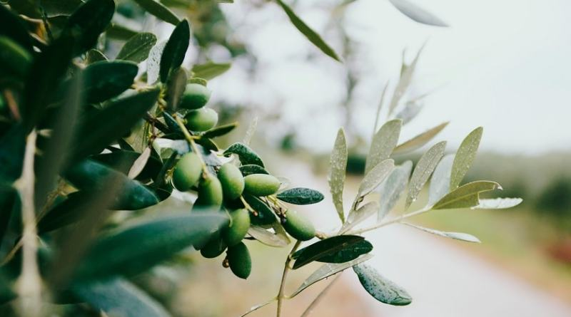 Friggere con l'olio extravergine d'oliva