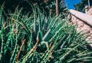 Aloe - proprietà, benefici, valori nutrizionali, calorie, usi