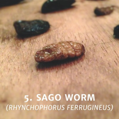 Eating a Sago Worm