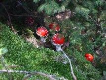 Mushroom gifts under the tree