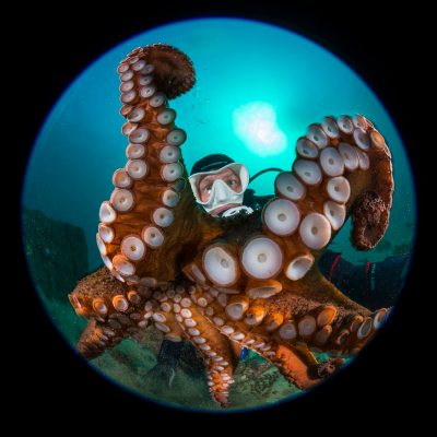 Nikkor 8-15mm Review for underwater photographers
