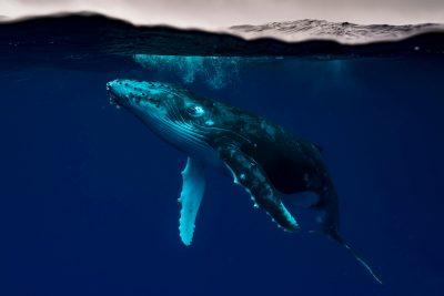 Matty Smith Photo Tonga Whale