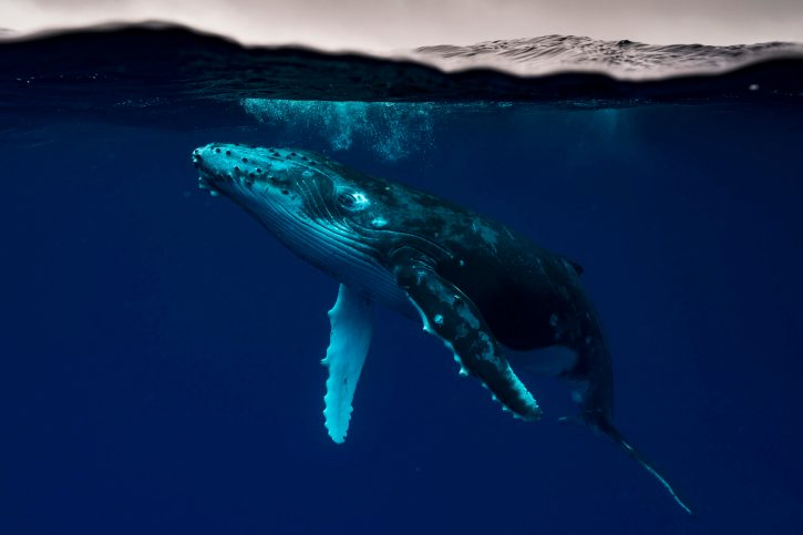 Matty Smith Photo Tonga Whale