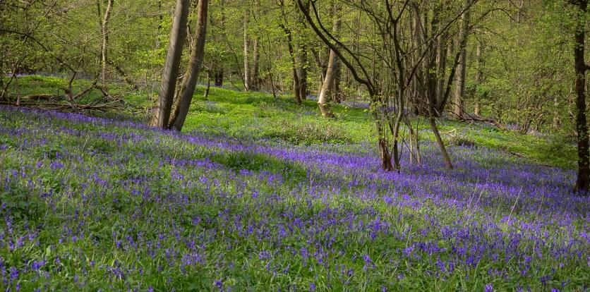 Maulden King's Wood