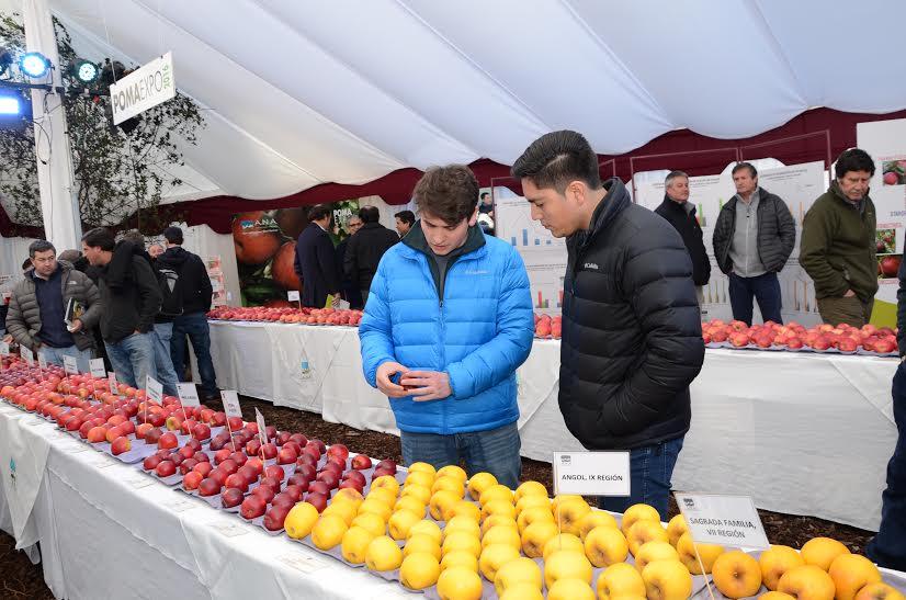 Universidad de Talca prepara nueva variedad de manzana resistente al daño por sol