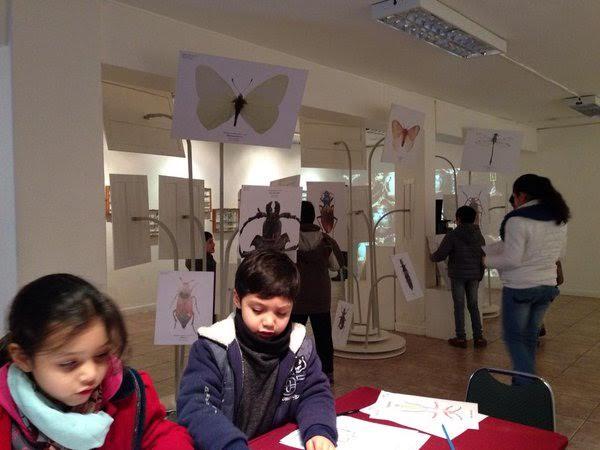 Explora Maule estrena exposición Diminutos en Linares