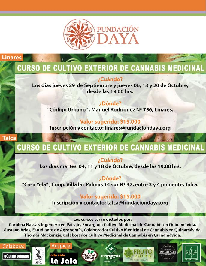 Linares y Talca tendrán cursos de autocultivo de cannabis