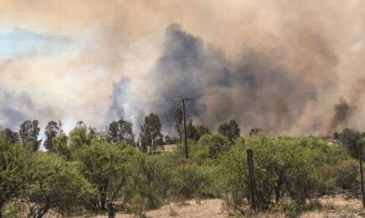 Formalizarán en Cauquenes a hombre acusado de iniciar incendio en plantación de eucalipto