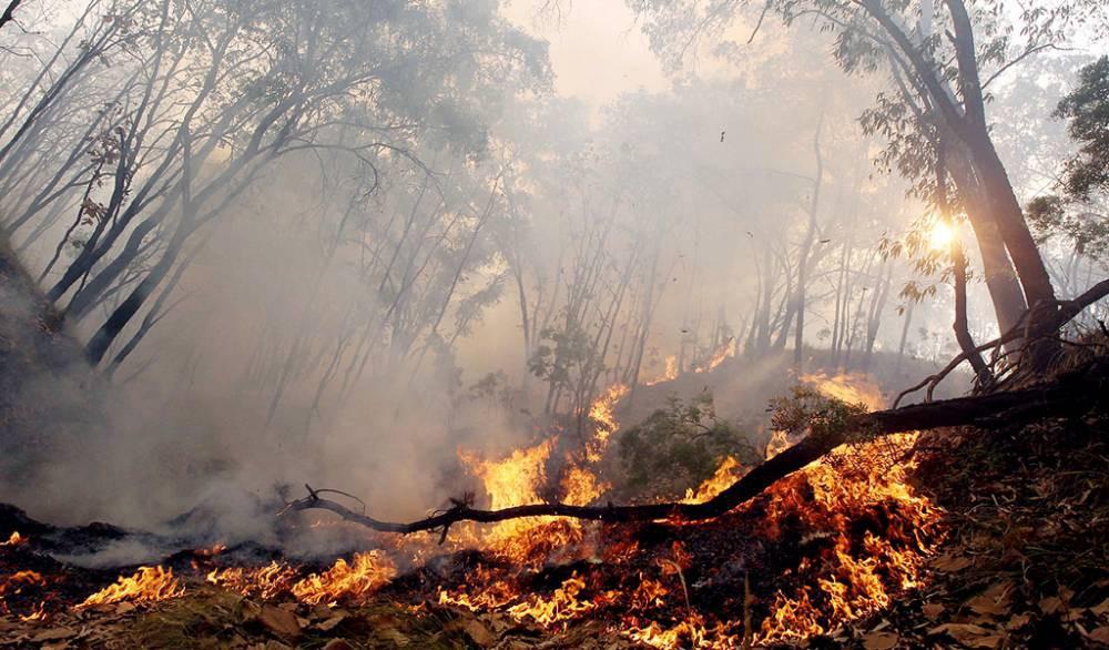 27 incendios forestales permanecen activos a nivel nacional: Continúa la amenaza a viviendas