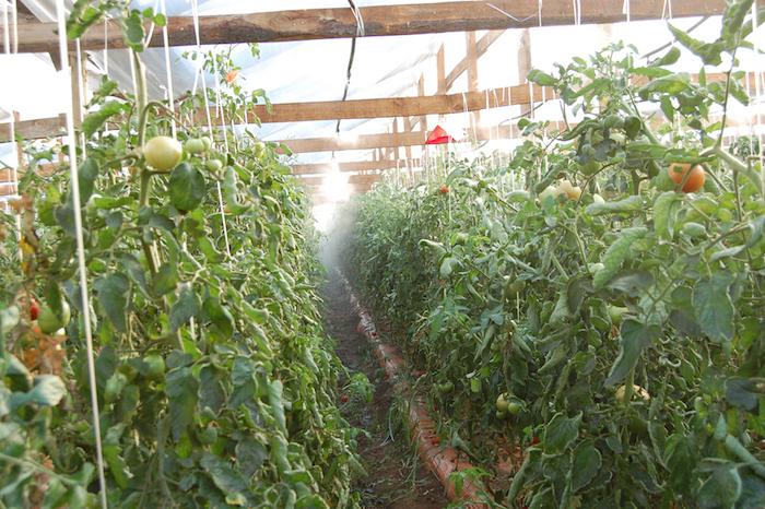 Las innovaciones que trae IFT AGRO 2017