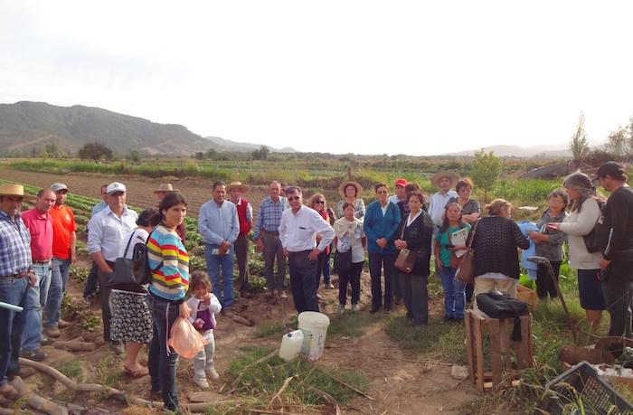 Pequeños agricultores de Licantén y Hualañé se capacitan con éxito en etiquetado y manejo de fitosanitarios