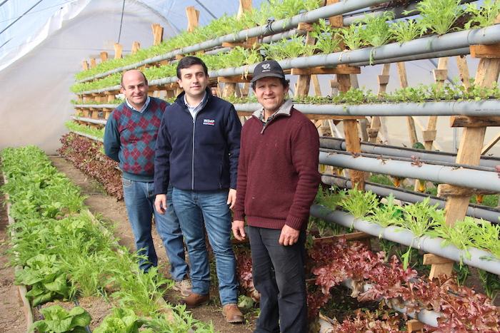 Con cultivo vertical de hortalizas abastece su local en Mercadito Campesino