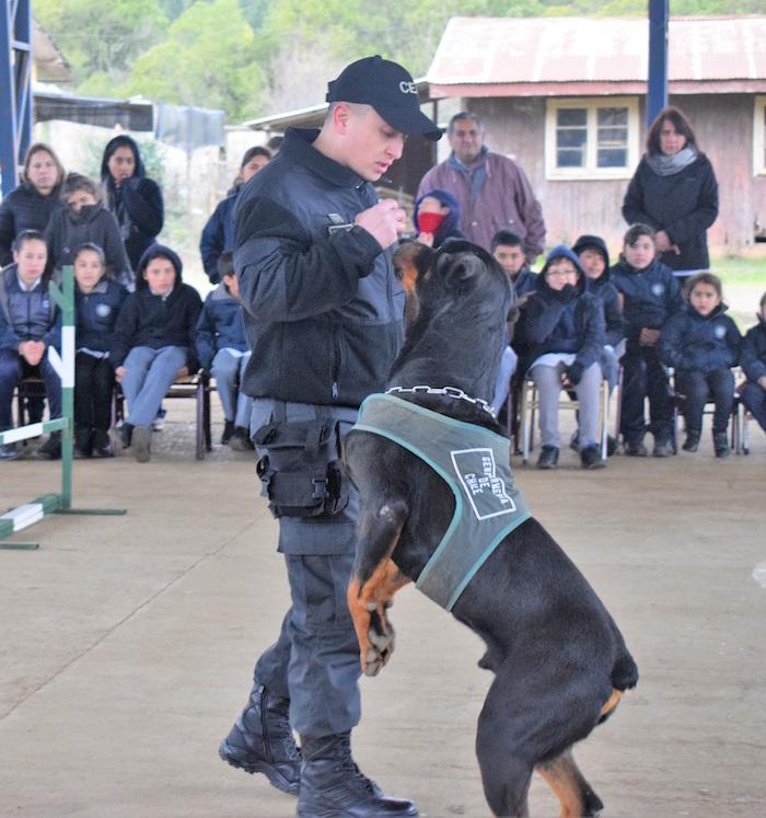 Instructores de los Equipos de Canes Adiestrados de Gendarmería, se capacitaron en enfermería canina