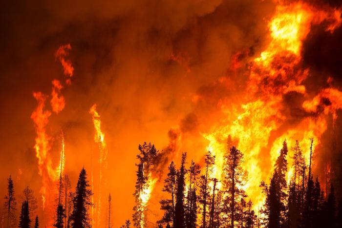 Conozca cómo puede ayudar a prevenir un incendio forestal