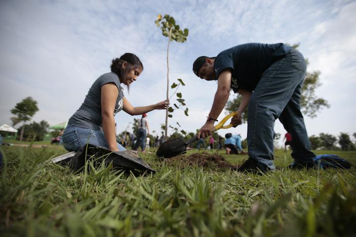 La reforestación sigue siendo un tema pendiente en la región 
