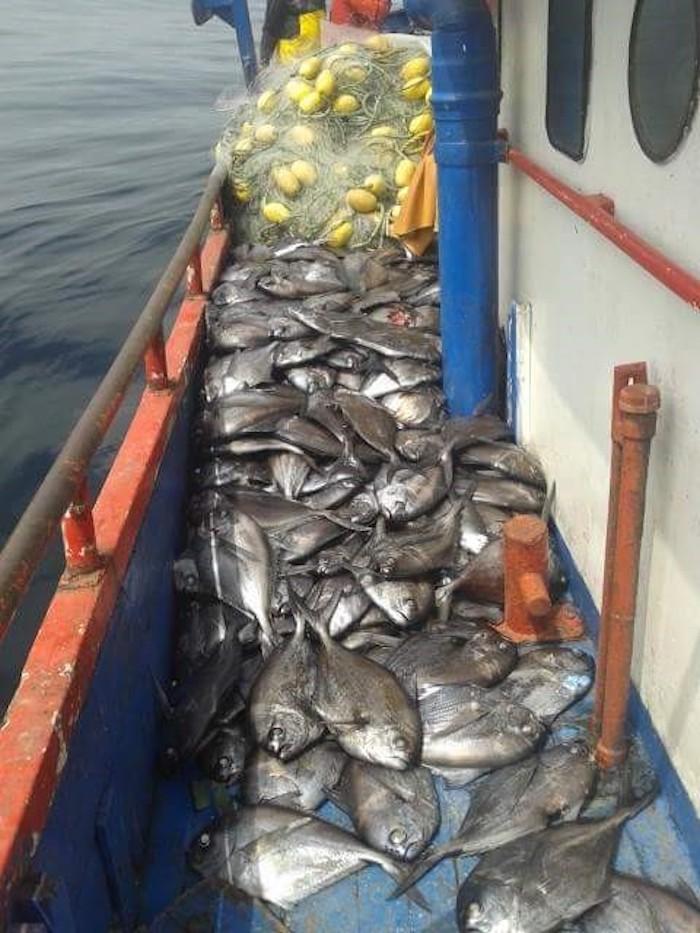 Sernapesca del Maule realiza positivo balance de pesca 2017